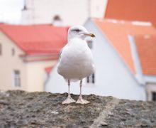 bilan-de-fin-d-annee-vlog-en-direct-d-estonie